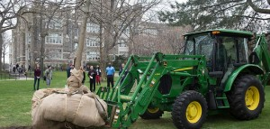 A pin oak is lowered into its new home south of Keating Hall. Photo by Jill Levine